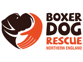 Boxer Dog Rescue Northern England