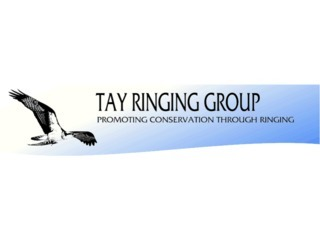Tay Ringing Group