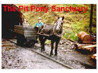 The Pit Pony Sanctuary - Fforest Uchaf Horse and Pony Centre