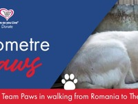 Walk a kilometre in their paws